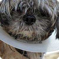 Adopt A Pet :: Wilbur Shih - Woodland Park, NJ