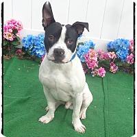 Adopt A Pet :: NIGHT - Marietta, GA