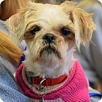 Adopt A Pet :: Maisie - Memphis, TN