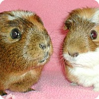Adopt A Pet :: Bailey - Steger, IL