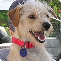 Adopt A Pet :: Luke - Santa Monica, CA