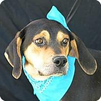 Adopt A Pet :: Heath - Plano, TX