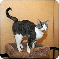 Adopt A Pet :: Priscilla - Farmingdale, NY