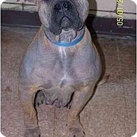 Adopt A Pet :: Fancy - Chicago, IL