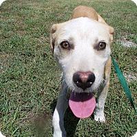 Adopt A Pet :: Cash - Albany, NY