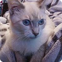Adopt A Pet :: Mickey - Alexandria, VA