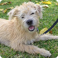 Adopt A Pet :: Winston - Santa Ana, CA