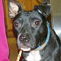 Adopt A Pet :: Miracle - Okmulgee, OK