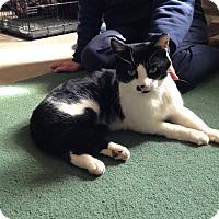 Adopt A Pet :: Moreo - Colmar, PA
