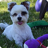Adopt A Pet :: Toby - Patterson, CA