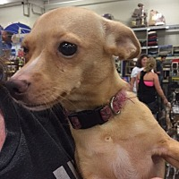 Terrier (Unknown Type, Medium) Mix Dog for adoption in Fresno, California - Sweetie