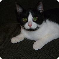 Adopt A Pet :: Anna - Stafford, VA