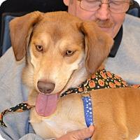 Adopt A Pet :: Dayton - Albemarle, NC