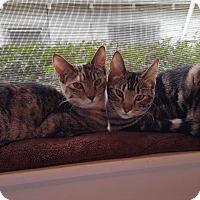 Adopt A Pet :: Prudence - Pasadena, CA