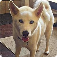 Adopt A Pet :: Elton--Coming soon! - Carrollton, TX