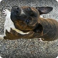 Adopt A Pet :: Mocha - Muskegon, MI