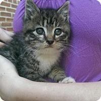 Adopt A Pet :: Gio - Washington, DC