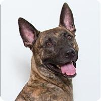 Adopt A Pet :: Zeus - San Luis Obispo, CA