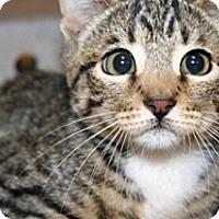 Adopt A Pet :: 303634 - Wildomar, CA