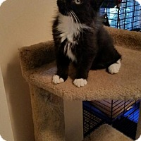 Adopt A Pet :: NJ - Renegade - Blairstown, NJ