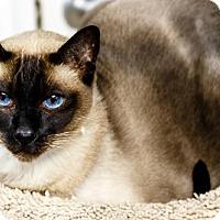 Adopt A Pet :: Ping - Oakland Park, FL