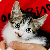 Adopt A Pet :: Survivor - Oakland Park, FL