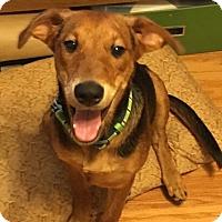 Adopt A Pet :: Diesel - Seattle, WA