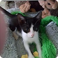 Adopt A Pet :: Fitzgerald - Pottstown, PA
