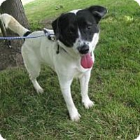 Adopt A Pet :: Dash - Hamilton, ON