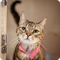 Adopt A Pet :: Kitty - Dallas, TX