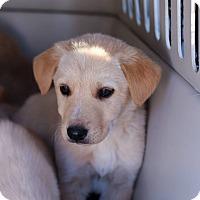 Adopt A Pet :: Luke - Sawyer, ND