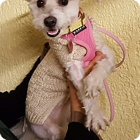 Adopt A Pet :: Crystal - Bronx, NY