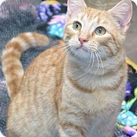 Adopt A Pet :: Spurs - Gonzales, TX