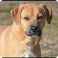 Adopt A Pet :: Junior - Brick, NJ