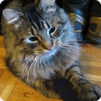 Adopt A Pet :: Vasha - Mississauga, Ontario, ON