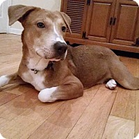 Adopt A Pet :: Mary Jane - Waterbury, CT