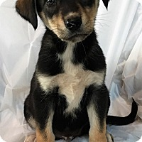 Adopt A Pet :: Zack - Mooresville, NC
