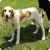 Adopt A Pet :: Davy - Schererville, IN
