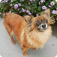 Adopt A Pet :: Hannah - Orange, CA
