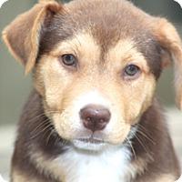 Adopt A Pet :: Lila - adoption pending - Norwalk, CT
