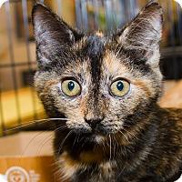 Adopt A Pet :: Tara - Irvine, CA