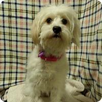 Adopt A Pet :: Miska - Mukwonago, WI