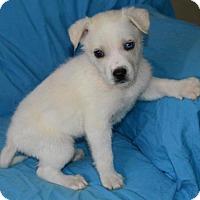 Adopt A Pet :: Blue Blood: Erin - Palo Alto, CA