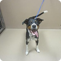 Adopt A Pet :: BOHANNON - Reno, NV