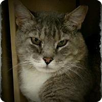 Adopt A Pet :: Billy - Pueblo West, CO