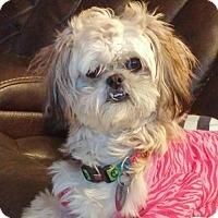 Adopt A Pet :: Maggie - Westville, IN