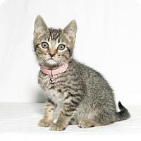 Adopt A Pet :: Adella - Lufkin, TX