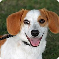 Adopt A Pet :: Maxwell - Joliet, IL