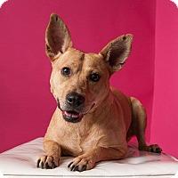 Adopt A Pet :: Addison - Houston, TX