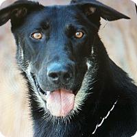Adopt A Pet :: WINDY VON WAGEN - Los Angeles, CA